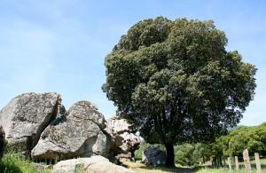 Chene Vert - Trails des Garrigues