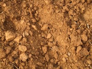 Les sols calcaires de la Garrigue